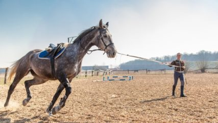 Best Places to Buy A Horse