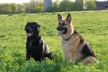 5 Postures Dogs Adopt to Communicate Their Feelings