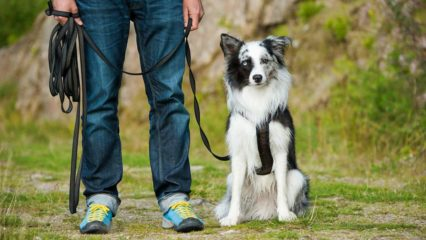 What is residential dog training and what are the benefits