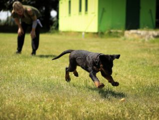 7 Techniques to Help You Train Your Stubborn Dog