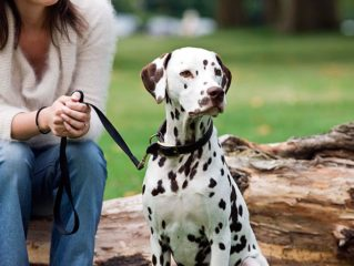 Canine Care Recommendation