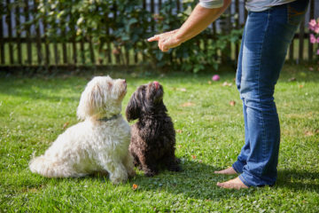 Canine country club- Right place for quality, loving and experienced pet care for your dog