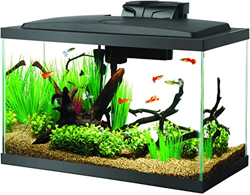 Tips To Buy The Best Fish Tank Pets Care Advice