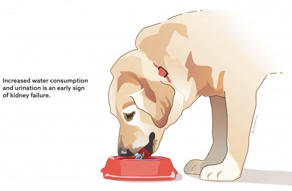 How Do I Know If My Pet Has Chronic Kidney Disease Pets Care Advice